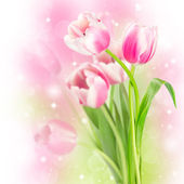 Flowers blooming tulips — Stock Photo