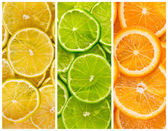 Background with citrus-fruit — 图库照片