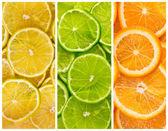 Hintergrund mit zitrus-früchten — Stockfoto