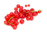 Sprig of red currant — Stock Photo