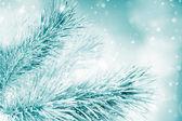 Fir Christmas tree branch — Stock Photo