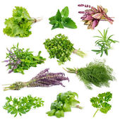 Set of aromatic herbs and spices — Stock Photo