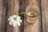 White Faded Flower in a Glass with Water — Stock Photo