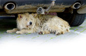 Slovenly shaggy watchdog — Stock Photo