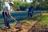 Trabalhadores cavando buracos para cerca — Foto Stock