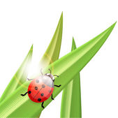 Ladybug an a blade of grass, illustration — Stock Vector