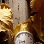 Autumn background. — Stock Photo #13358970