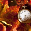 Stock Photo: Autumn background.