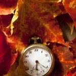 Autumn background. — Stock Photo #13546379