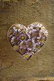 Corazón de flores. — Foto de Stock