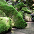 Moss-covered stone — Stock Photo