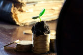Golden coins in soil with young plant. Money growth concept. — Stock Photo