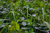 Drops on the grass — Stock Photo