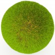 Green grass ball. — Stock Photo