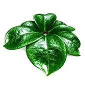 Green leaf background — Stock Photo