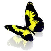 Butterfly. — Stock Photo