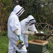 Beekeepers dressed in protective suits to carrying out maintenance checks on their bee hive using a smoker to calm the bees. — Foto Stock #27290645