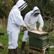 Beekeepers — Stock Photo
