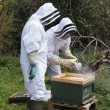 Foto Stock: Beekeepers