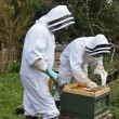 Stock Photo: beekeepers