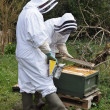 Foto de Stock  : Beekeepers