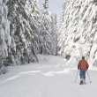 Stock Photo: Person snowshoeing in winter landscape