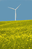 Wind turbines in a field of yellow flowers — Stock Photo