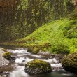 Stock Photo: Pacific Northwest Forest stream