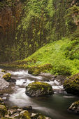 Pacific Northwest Forest stream — Stock Photo