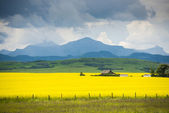 Farm house in field of canola — Stock Photo