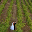 Newlyweds kissing in a vineyard — Stock Photo