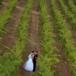 Royalty-Free Stock Photo: Newlyweds kissing in a vineyard
