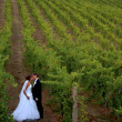 Stock Photo: Newlyweds kissing in vineyard