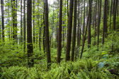 Green forest and ferns — Stock Photo