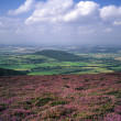 Heather in Yorkshire, England — Stock Photo #21650843