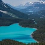 Petyo Lake, Banff National Park — Stock Photo #21769201