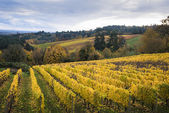 Autumn vineyards, Willamette Valley, Oregon — Stock Photo