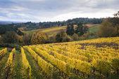 Autumn vineyards, Willamette Valley, Oregon — Stock Photo