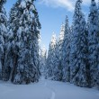 Fir forest covered in winter snow — Stock Photo #21847591