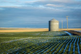 Grain bin, winter wheat fields — Stock Photo