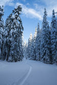 Fir forest covered in winter snow — Stock Photo