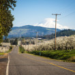 Stock Photo: Rural road, Mt. Adams