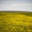 Stock Photo: Wind turbines in field of yellow flowers