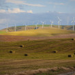 Wind turbines among wheat fields — Stock Photo