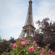 Stock Photo: Eiffel Tower and red roses