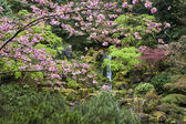 Spring in a Japanese garden — Stock Photo