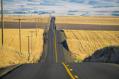 Road, wheat fields, Washington State — Stock Photo