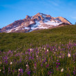 Sunset glow, Mt. hood, Oregon — Stock Photo #33163041