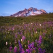 Stock Photo: Sunset glow, Mt. hood, Oregon