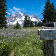 Wooden trail sign, Mt. hood, Oregon — Stock Photo